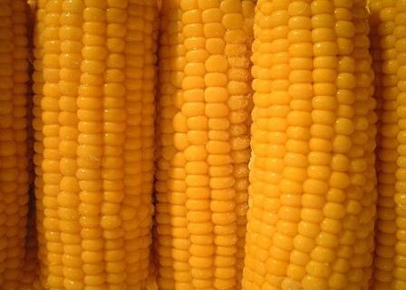 Семена за царевица Futurixx DUO